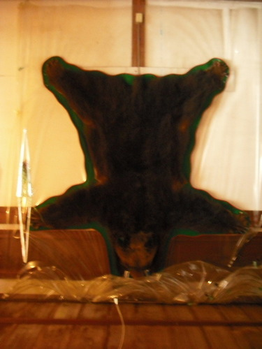 生きる花、死んでる熊。